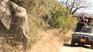 African Safari news image
