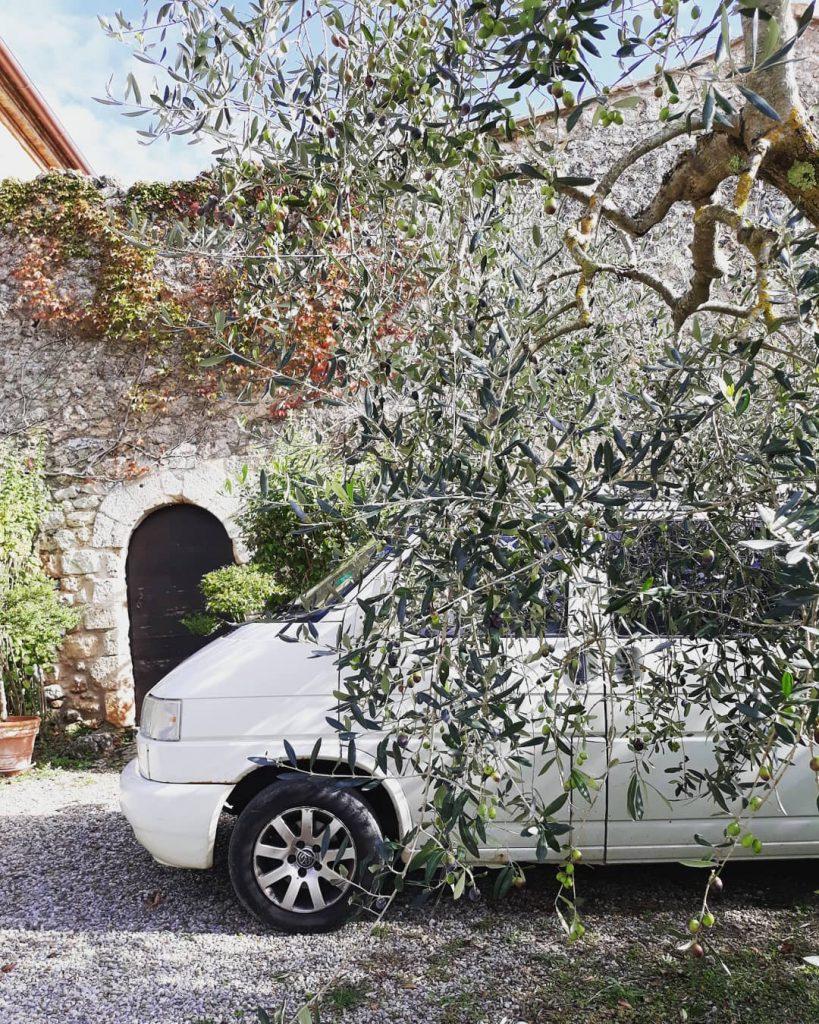 Van life Olive Tree